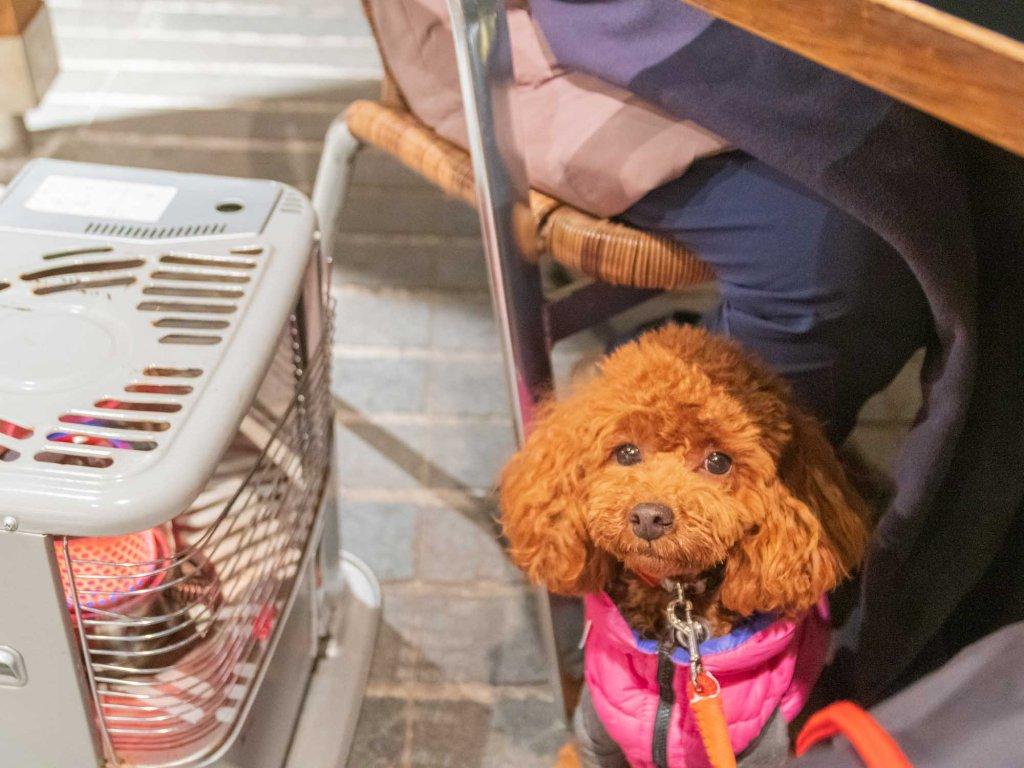 テラス席でストーブにあたる犬