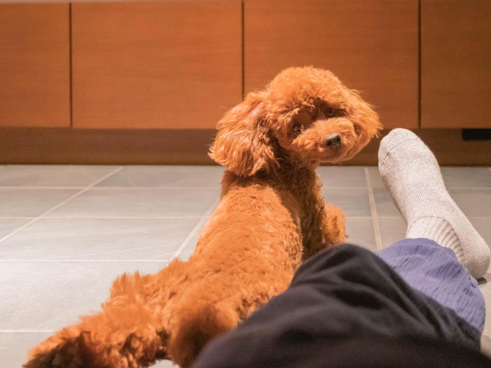 宿の部屋でくつろぐ犬